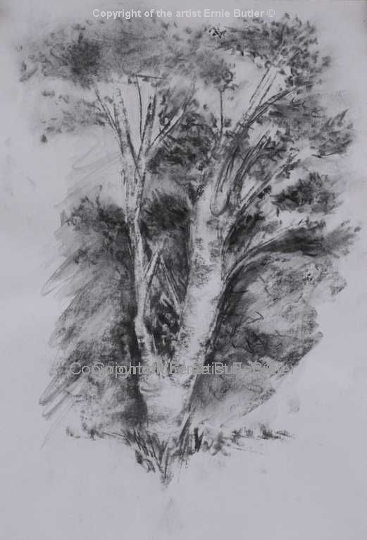 sketch charcoal tree drawing
